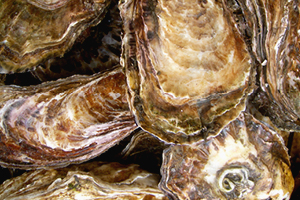 oesters