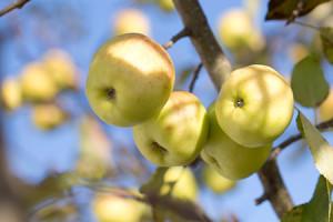 valentijn-appel-recept-met-azijn